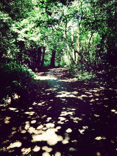summery walk Beautiful Enchanted  Nature Summer