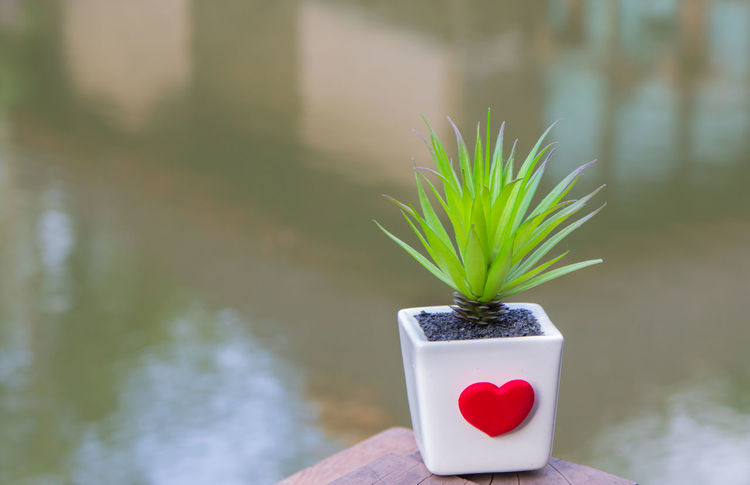 Beauty In Nature Day Focus On Foreground Fragility Freshness Green Color Growth Heart Shape Nature No People Outdoors Plant Red Reflective Glass Architecture