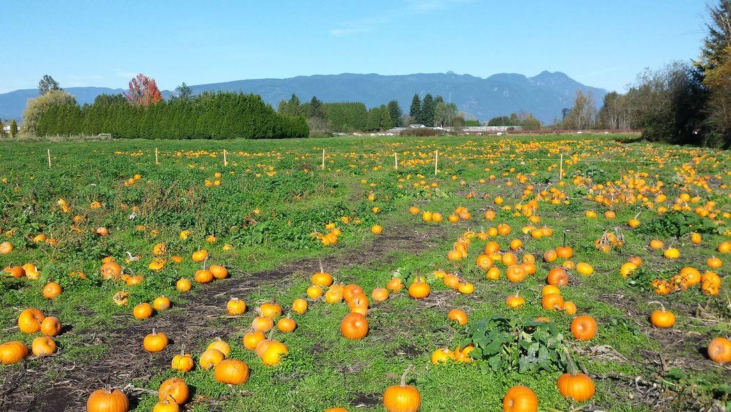 Field Beauty In Nature Scenics Autumn Abundance Beauty In Nature The Great Outdoors - 2017 EyeEm Awards