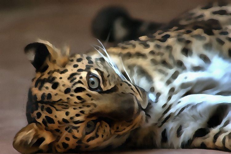 Animal Themes Animal Wildlife Animals In The Wild Close-up Day Digital Art Indoors  Leopard Mammal No People One Animal