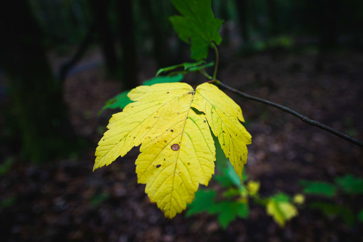Close-up of yellow leaf against blurred background