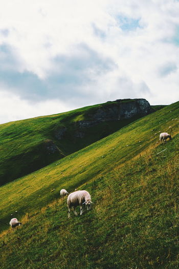 Treak Cliff Cavern, Peak District Rural Scene Agriculture Hill Field Farm Sky Landscape Cloud - Sky Flock Of Sheep Pasture Sheep Lamb Cultivated Land Grazing Livestock Domestic