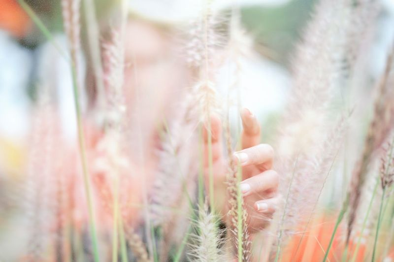 Search Cereal Plant Close-up Plant Needle - Plant Part Pine Cone Ear Of Wheat Cultivated Land Grain Plantation Dandelion Wildflower Prickly Pear Cactus Barrel Cactus Pine Tree Oilseed Rape Wheat Barley Pinaceae Farmland Uncultivated Stem Growing Crop  Agricultural Field