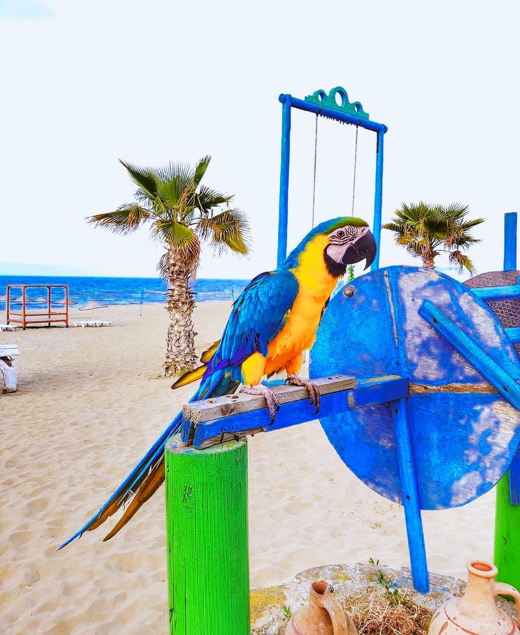 beach, palm tree, tropical climate, nature, animal, blue, land, bird, parrot, animal themes, sea, day, pet, water, sand, tree, animal wildlife, sky, no people, outdoors, plant, multi colored, beauty in nature, perching, wildlife