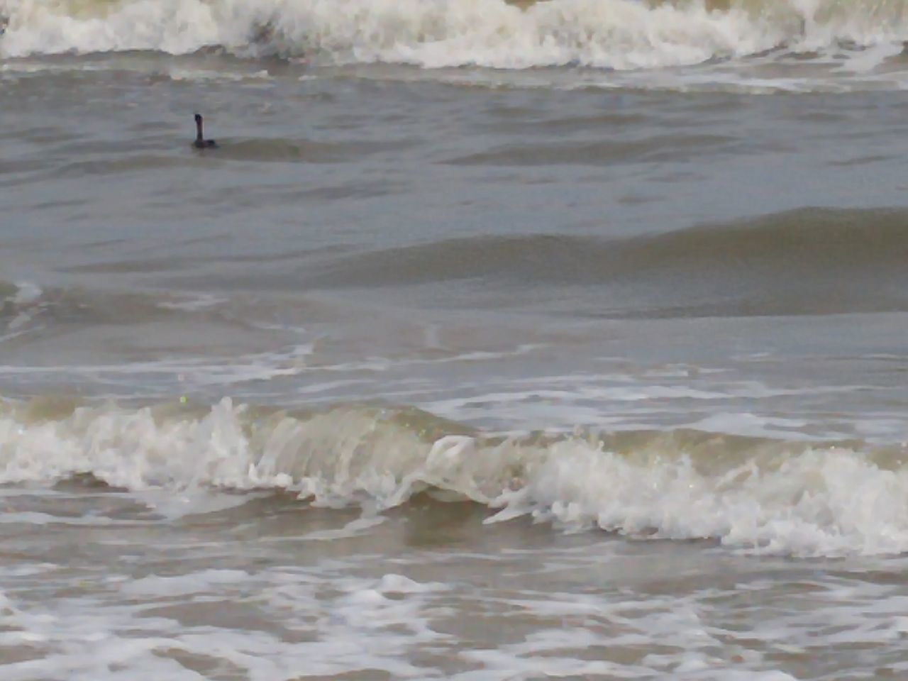 wave, water, sea, nature, beach, outdoors, waterfront, beauty in nature, sand, day, bird, no people, swimming