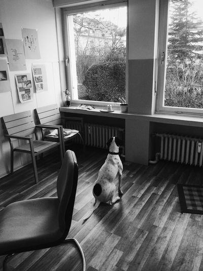 Hund Wartet Dog Waits Dog Waits