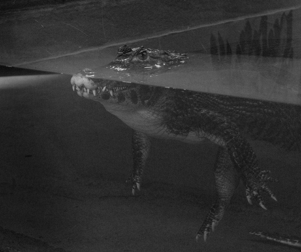 animal, animal themes, one animal, animal wildlife, animals in the wild, water, vertebrate, reptile, sea, swimming, underwater, no people, nature, marine, sea life, turtle, close-up, animals in captivity, outdoors