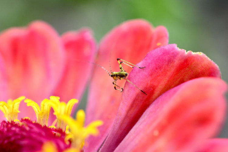 insect on a gerbera flower Antena Bug Spider Animal Animal Themes Animal Wildlife Animals In The Wild Antenae Aromatic Close-up Flower Gerbera Gerbera Daisy Gerbera Flower Insect Invertebrate No People One Animal Petal Plant