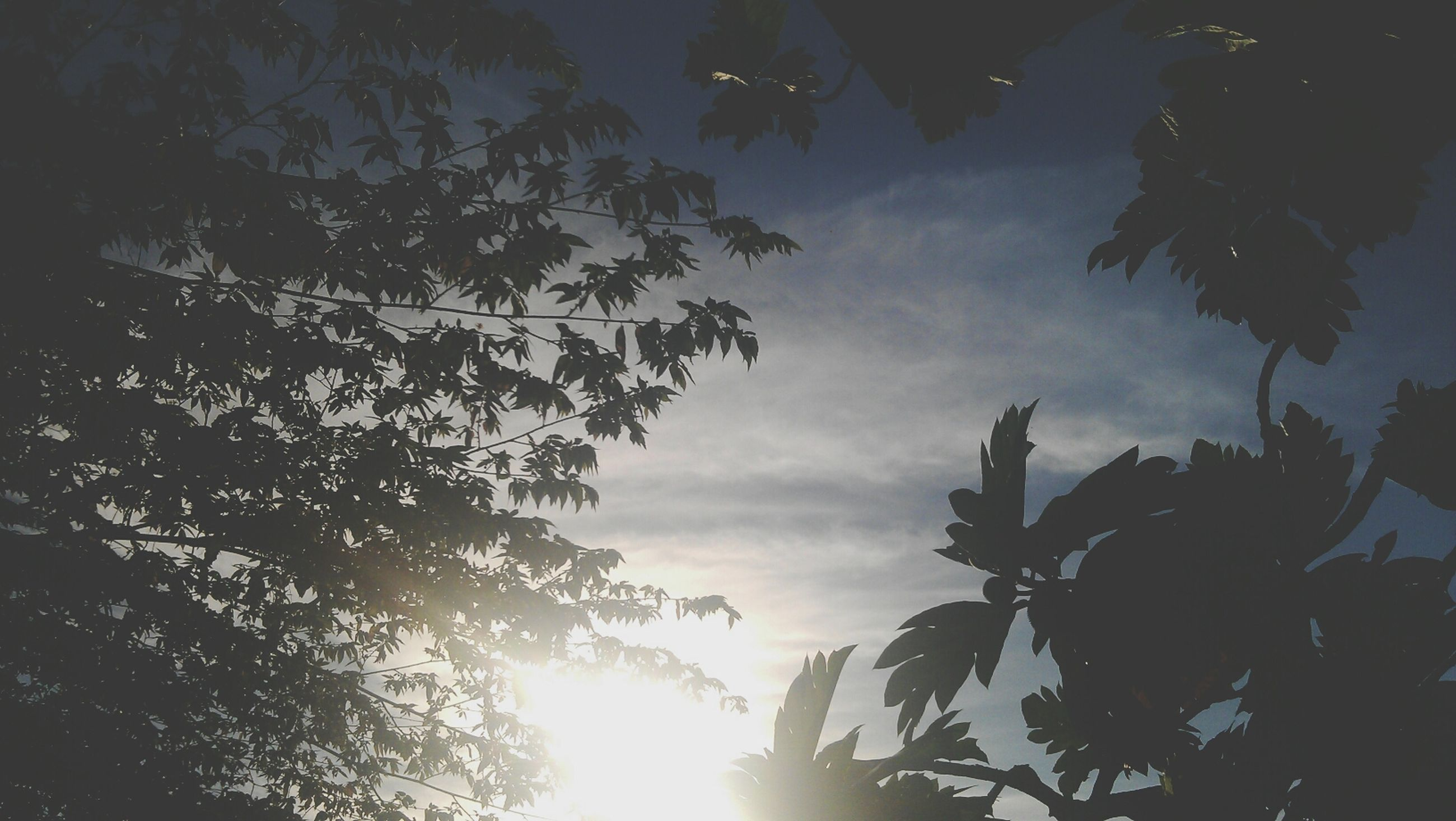 low angle view, tree, sky, sun, silhouette, branch, nature, sunbeam, sunlight, beauty in nature, cloud - sky, growth, sunset, tranquility, lens flare, outdoors, leaf, no people, scenics, day