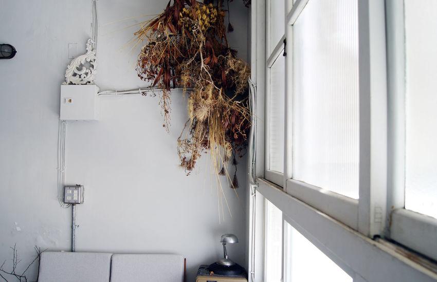 台南老街裡,正上演著關於藝術家新作品發表,來參與的人們,有些在一樓靜靜的欣賞著作品,一些則在二樓喝著茶 或 咖啡,想著,就這樣吧,時間就停留在這吧。 More Detail:https://goo.gl/XZGwaI Dried Flowers Flower Tainan Taiwan Windows 中西區 兩倆 台南 台灣