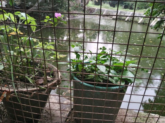 High angle view of potted plant by pond seen through fence