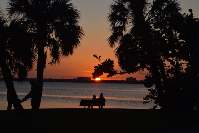 Beautiful Florida Sunset Christmas 🎄evening! Outdoors Sea Water Beauty In Nature Scenics Relaxation Sky Tree Trunk Nature Sitting Beach Two People Sunset Palm Tree Tree Silhouette Silhouettes Orange Sky Sunset_collection Sunset_captures Taking Photos Evening Sky Sun Colorful Sky Landscape Landscape_Collection Bench