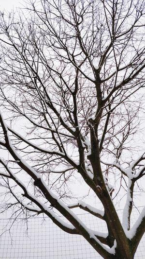 Rami e reticoli. Tree Sky Cold Temperature Cold Days Branches Branches And Sky Bare Tree Wintertime