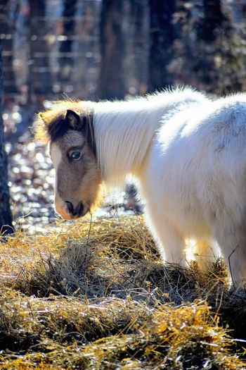 Pony Pets