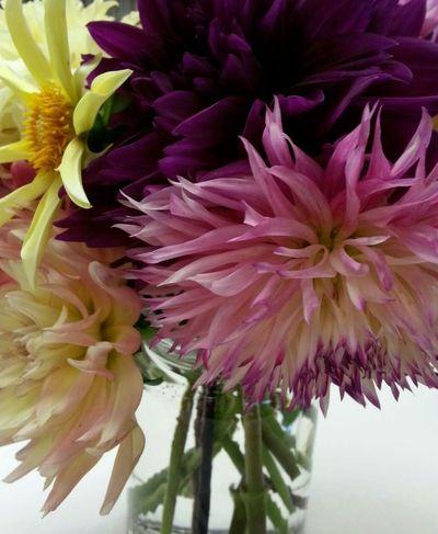 Flowers In Vases Flowers Ohio, USA