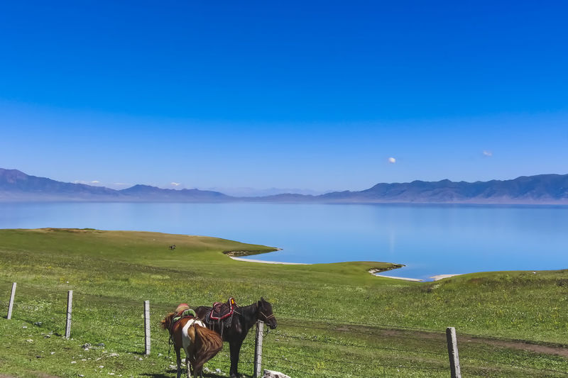 View of a horse on landscape against sky