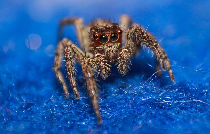 spider macro on