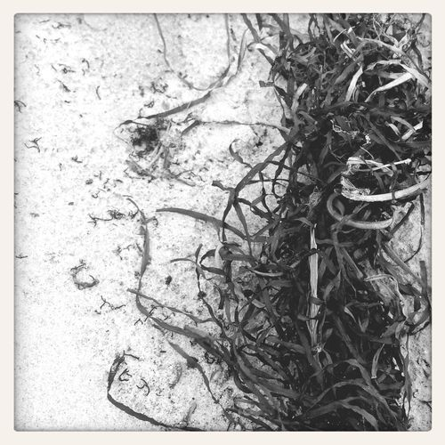 Monochrome Black And White Beach Autumn