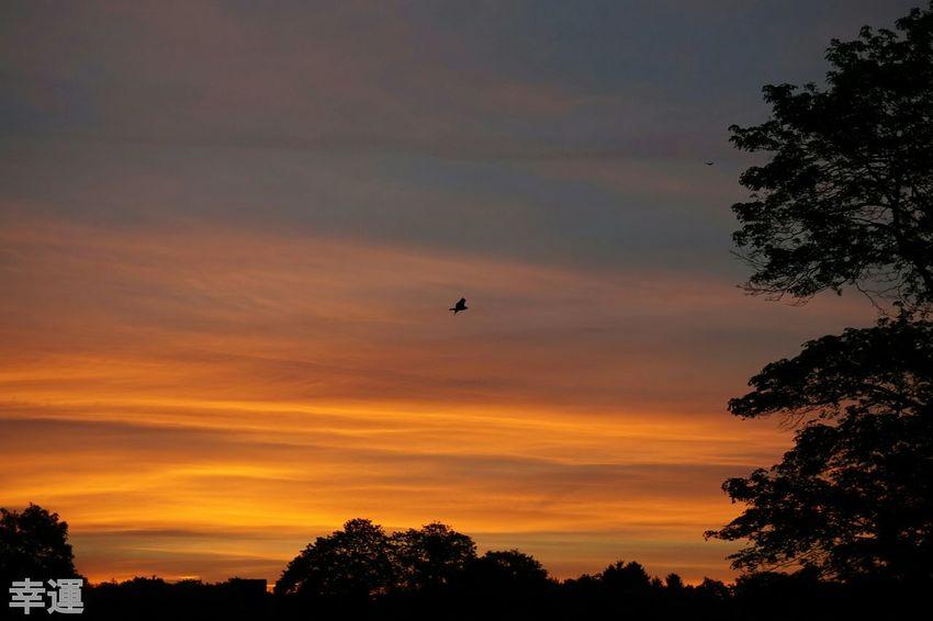 Goodmorning Dawn RedSky Skyhunter Sunrise EyeEm Best Shots - Sunsets + Sunrise Twilight Landscape Nature Eyem Best Shots