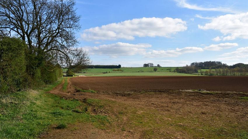 Taking Photos Harlaxton Landscape Hedgeline Fields Nikon D5500