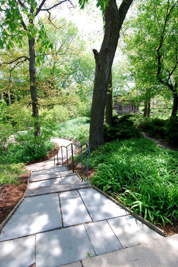 Bluestone Path in the Library Gardens Architecture Beauty In Nature Bluestone Rocks Bluestone Stairs Day Garden Path Green Color Growth Nature No People Outdoors Tree