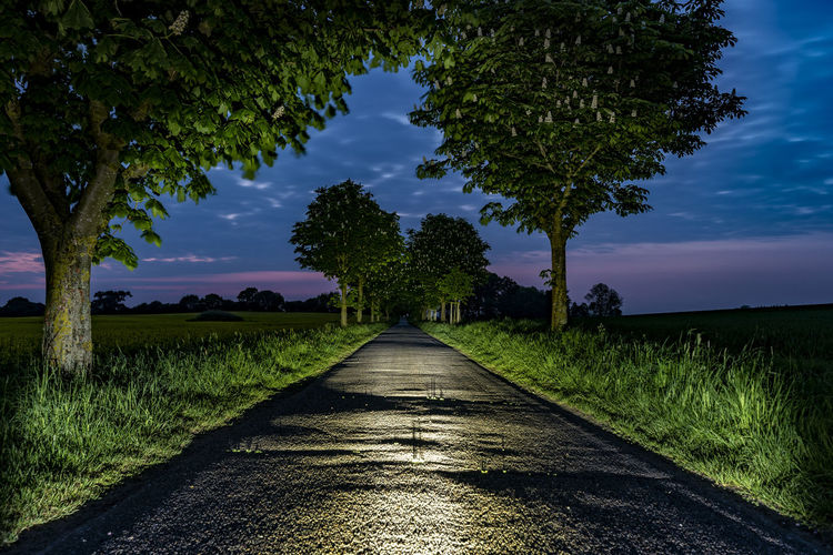 Avenue Capture Tomorrow Direction Plant The Way Forward Tree Diminishing Perspective Grass Nature Growth Sky Cloud - Sky No People Land Road vanishing point Field Transportation Footpath Tranquility Tranquil Scene Beauty In Nature Outdoors Straight Treelined Long Surface Level