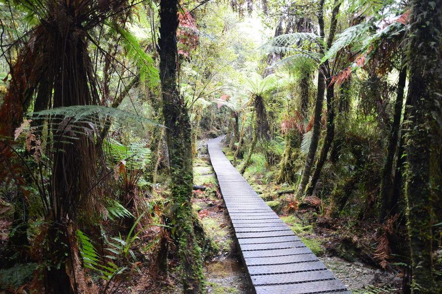 New Zealand Haast Pass Makarora Blue Pools Blue Pools Walk Blue Pool Track Jungle Path Walkway Forest Hiking Travel Traveling Mount Aspiring National Park Mt Aspiring EyeEmNewHere