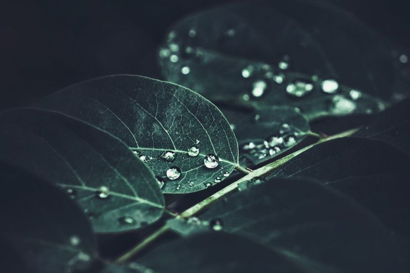 Drop Wet Rain Close-up Leaf Water Nature No People Fragility RainDrop Rainy Season Droplet Outdoors Spider Web Beauty In Nature Day Tree Web