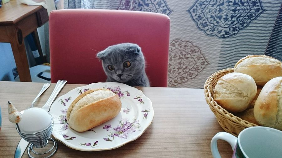 Cat on chair in front of breads on table