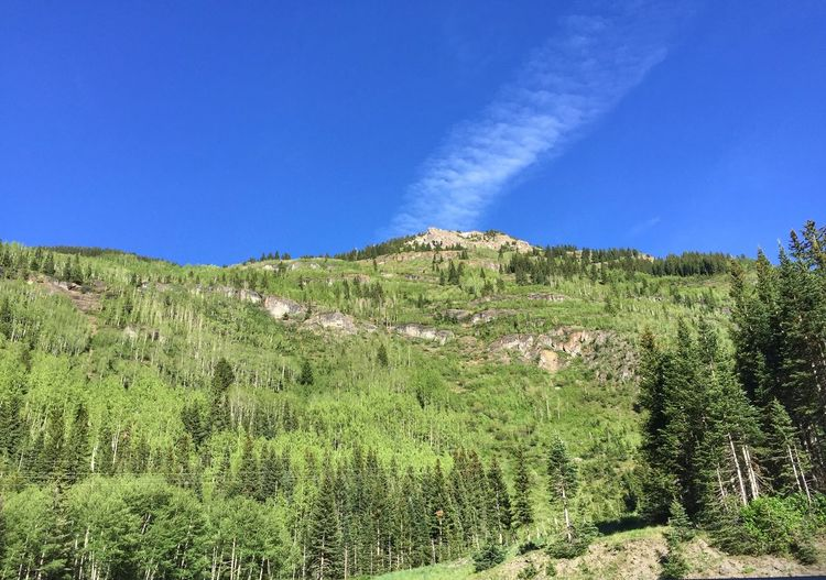 Low angle view of a tree-covered mountain in Colorado Million Dollar Highway Colorado Growth Nature Beauty In Nature Blue Tranquility No People Green Color Tranquil Scene Outdoors Agriculture Landscape Sky Grass Clear Sky Tree Day Scenics