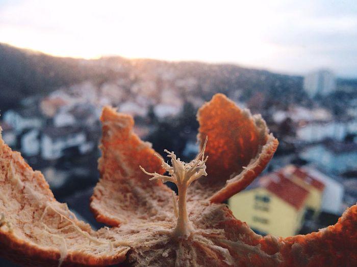 Close-Up Of Orange Peel In Garbage Dump