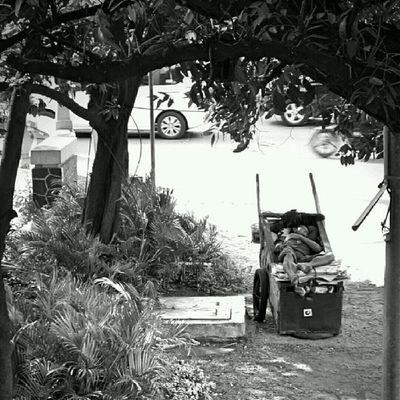 Terlelap di atas gerobak, bernaung di bawah rindang pohon di pinggir kali berbau busuk. Jakarta Sesuatu Bw