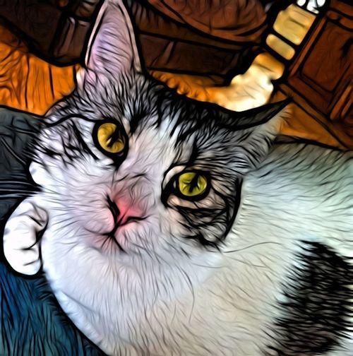 My Little Grandcat