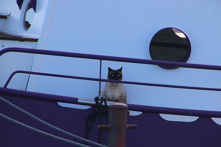 Cat on a ship One Animal Animal Themes Domestic Animals Mammal Animal Domestic Pets Vertebrate Railing Transportation