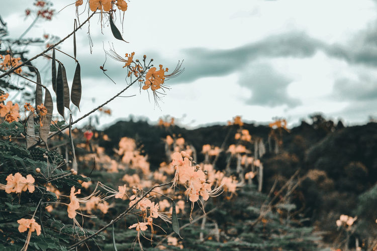 Flowers Yellow Yellow Flower Good Weather Fine Weather Beauty In Nature Plants Life Earth Nature Clouds And Sky Clear Sky Bokeh EyeEm Selects Tree Pinaceae Autumn Branch Sky Close-up Plant Blooming Petal In Bloom Plant Life Pollen