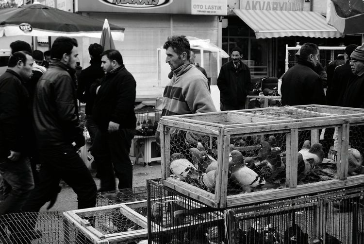 Blackandwhite Black And White Black & White Streetphotography Street Photography Streetphoto_bw Street Streetphotography_bw Birds Monochrome Working