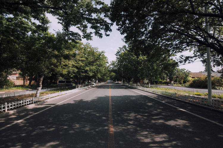 City Day Diminishing Perspective Direction Dividing Line Growth Infinity Long Marking Nature No People Outdoors Plant Road Road Marking Sign Sky Sunlight Symbol The Way Forward Transportation Tree Treelined vanishing point A New Beginning