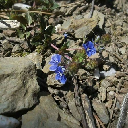 Flowers Nice Beautiful Wonderful Etc