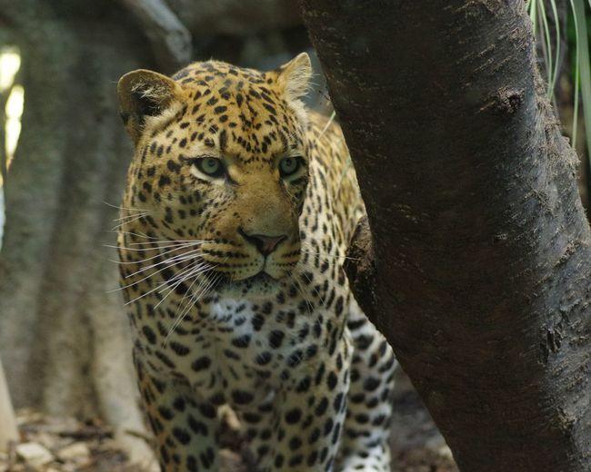 昼ごはん何食べようかな…。 Panther EyeEm Animal Lover Animal Tadaa Community Tadaa EyeEm Best Shots