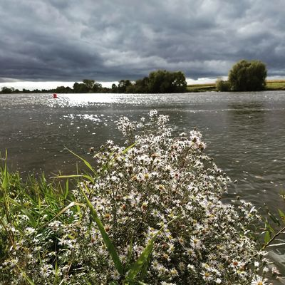 Cloud - Sky Landscape Maas