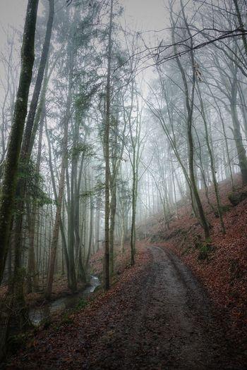 Waldweg in