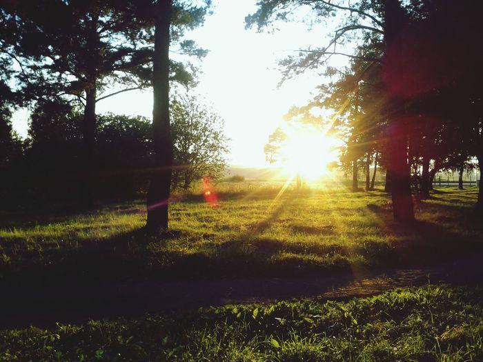 People Watching Relaxing Picnic Enjoying The Sun sunset.