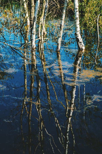 Foulshaw Moss Nature Reserve Reflections In The Water Reflection Nature Beautiful Water Backgrounds Full Frame Tree Pattern Close-up Growing Standing Water Lakeside Calm
