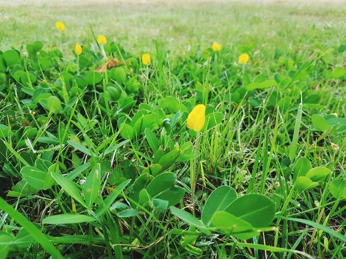 Brazil Nut Green Feilds Close-up Grass