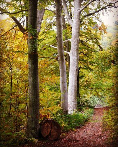 Sentier CourzieuForest