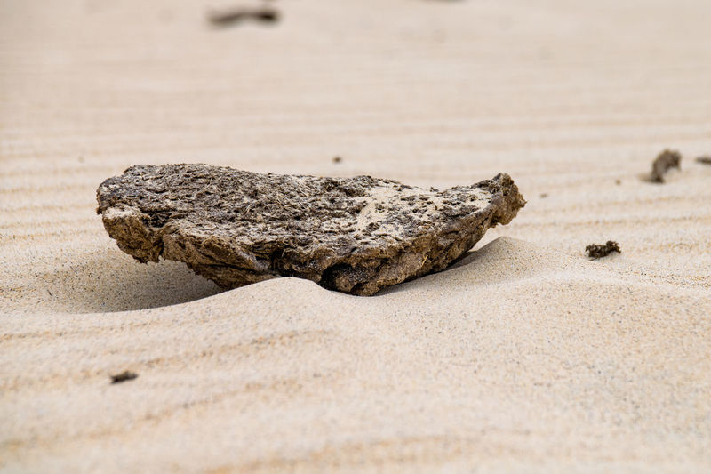 cow pat in the sand Cow Pat Animal Animal Themes Animal Wildlife Animals In The Wild Beach Close-up Cold Temperature Cow Poo Cowpat Day Iguana Nature No People One Animal Outdoors Poo Reptile Sand