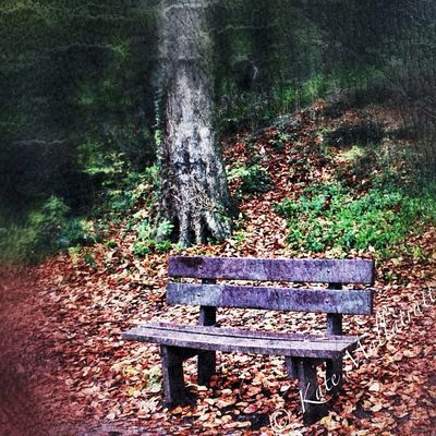 Snapseed Photo365 Photooftheday Nottinghamshire Mansfield Seat Tree Trees Forest Walk Wood Woods Fall Autumn Igers Igersnottingham Instagood Instadaily Instagrammers K8marieuk Iwatermark HDR