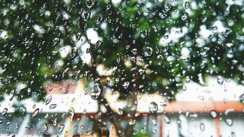 Raining still (Nov, 2017)