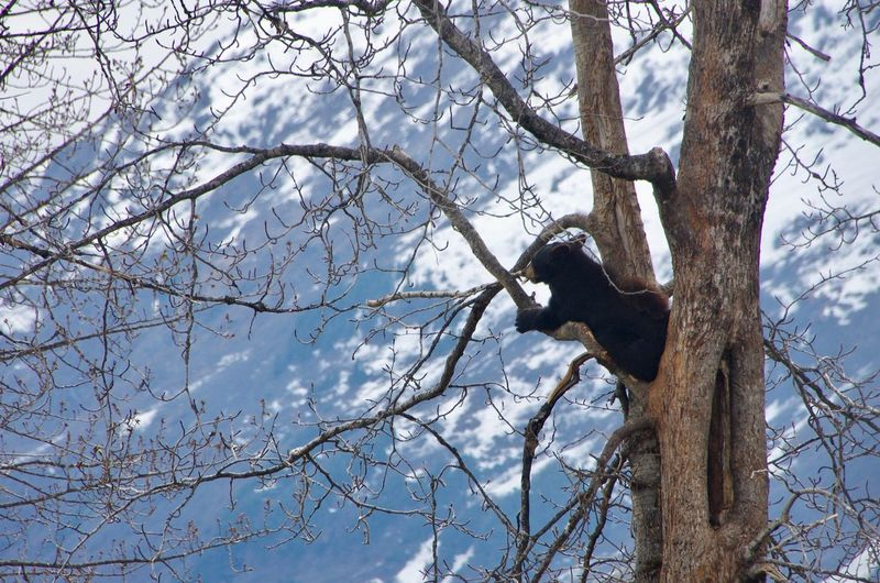 Animals In The Wild Beauty In Nature Black Bear On The Tree Nature Tree