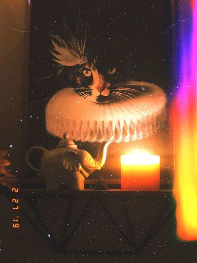 Candlelight Creativity Interior Design Teapot Art Painting Cat Night Burning Fire Flame Illuminated Orange Color Candle